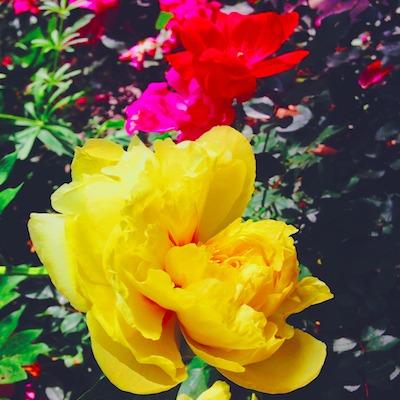 flower 400